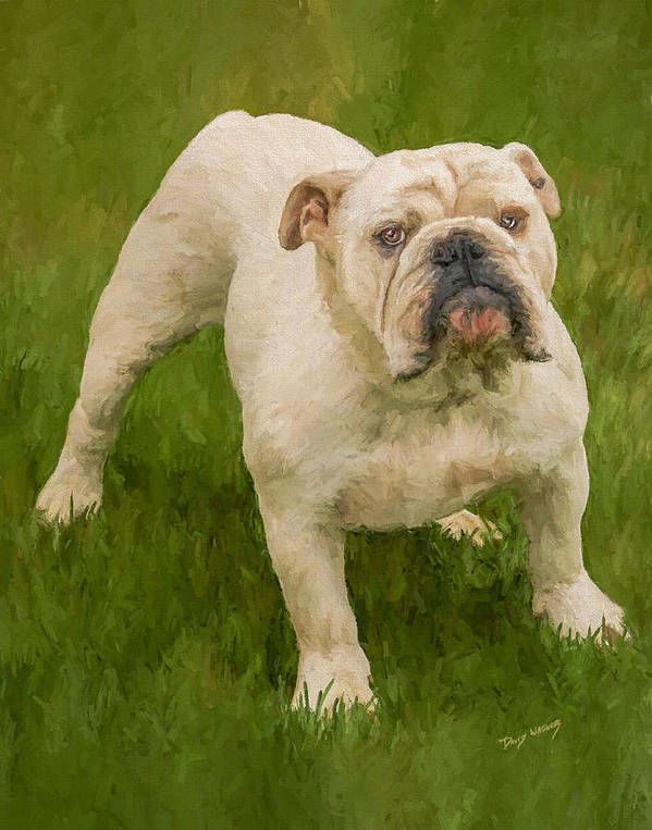 Dog Poster featuring the painting Bruce The Bulldog by David Wagner