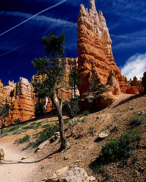 Bryce Canyon Poster featuring the photograph Bryce Canyon 10 by Art Ferrier