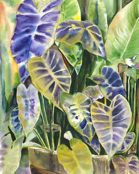 Foliage Of A Taro Plant In Water Poster featuring the painting Bucket Of Purple Taro by Ileana Carreno