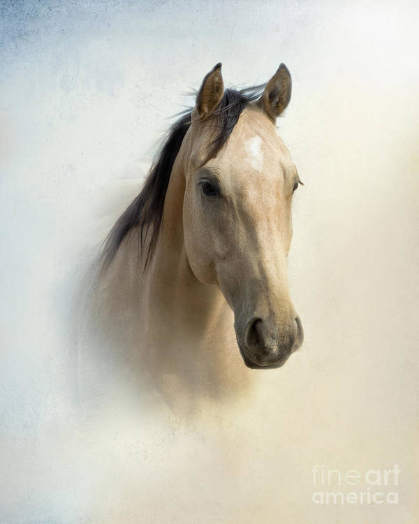 Horse Poster featuring the photograph Buckskin Beauty by Betty LaRue