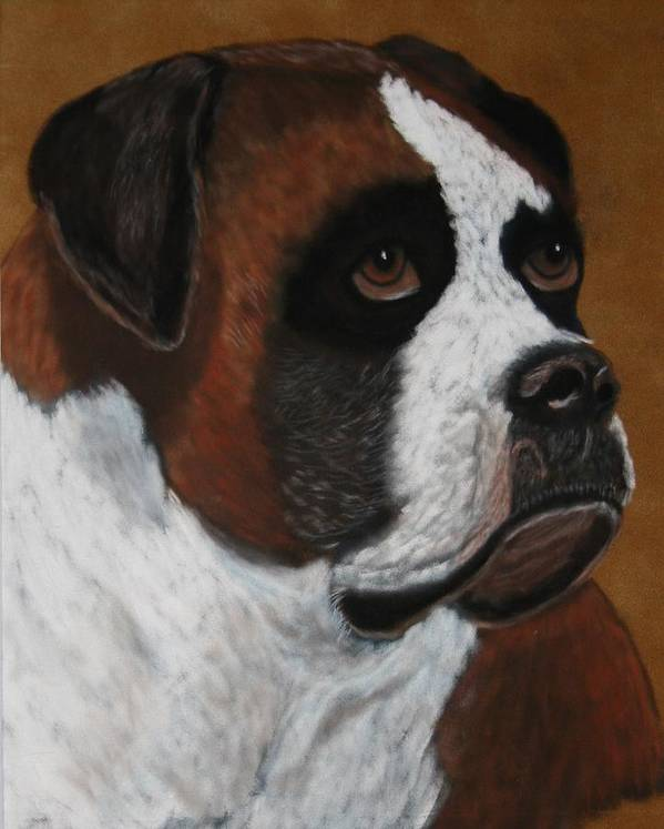 Boxer Paintings Poster featuring the painting Buddy by Lori DeBruijn