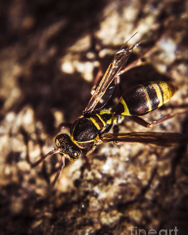 Insects Poster featuring the photograph Bugs Life by Jorgo Photography - Wall Art Gallery