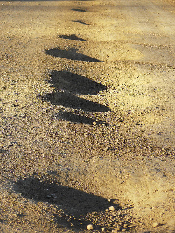 Fun Poster featuring the photograph Bumps In The Road by David Kehrli