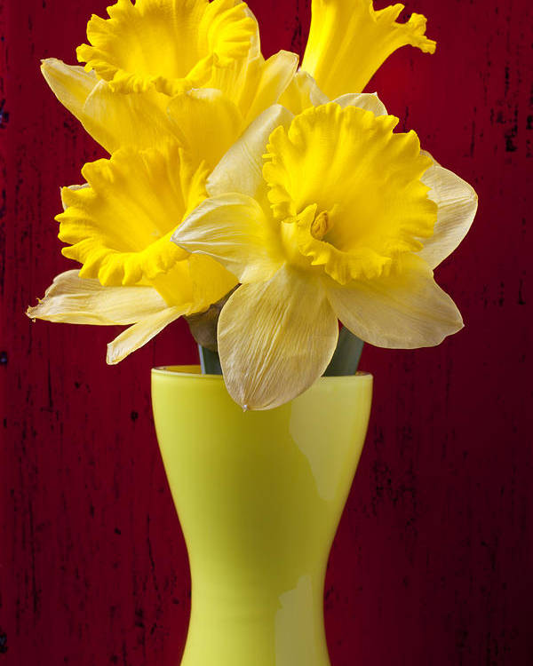 Yellow Poster featuring the photograph Bunch Of Daffodils by Garry Gay