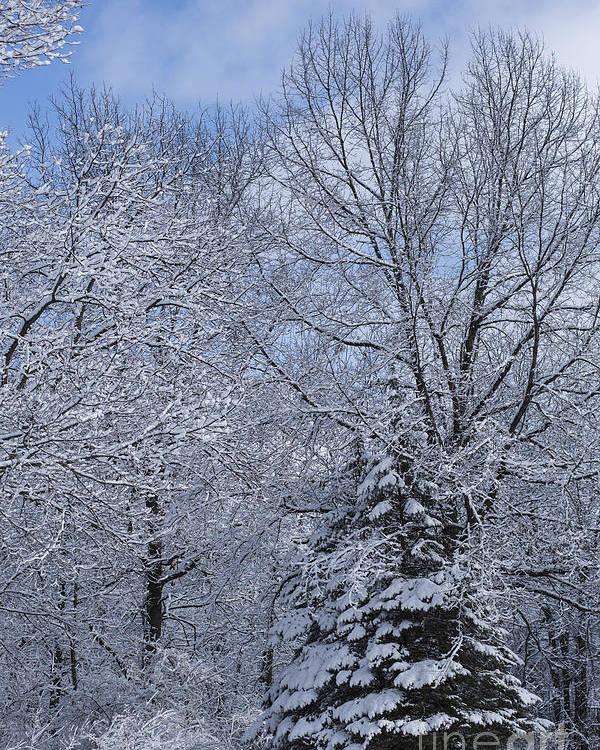 Winter Poster featuring the photograph Burnidge Winter by David Bearden