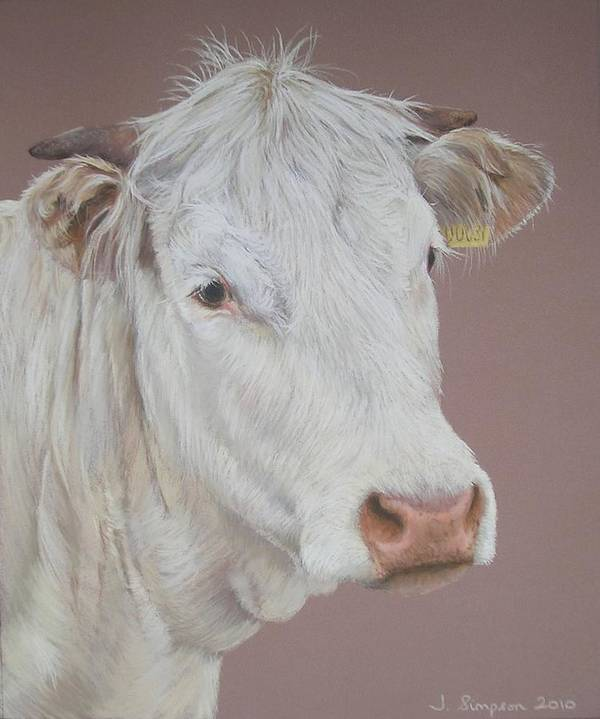 Cattle Poster featuring the pastel Buttercup by Joanne Simpson