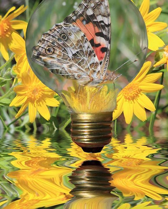 Butterfly Poster featuring the photograph Butterfly In A Bulb II by Shane Bechler