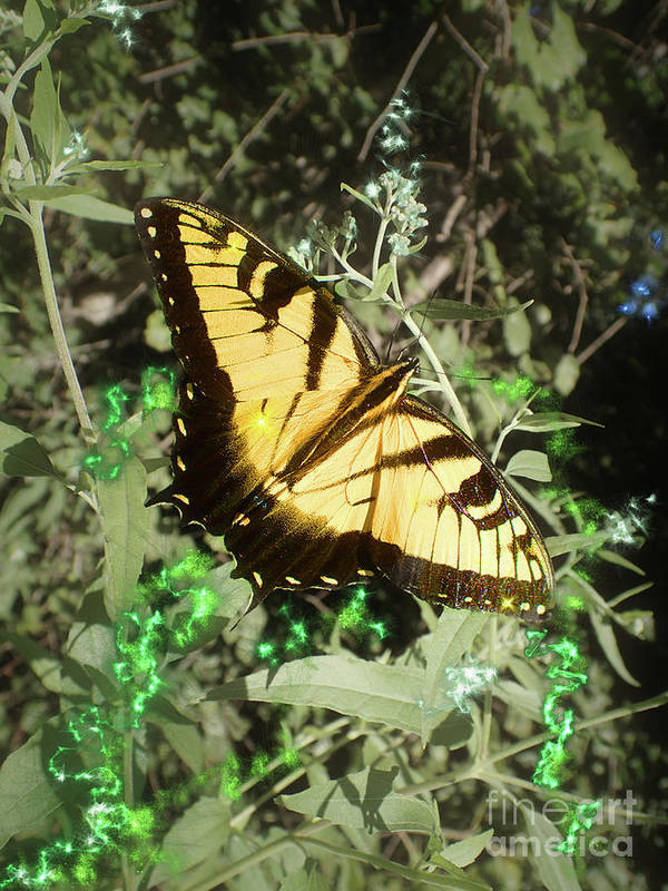 Eastern Tiger Swallowtail Poster featuring the photograph Butterfly Magic by Nicole Angell