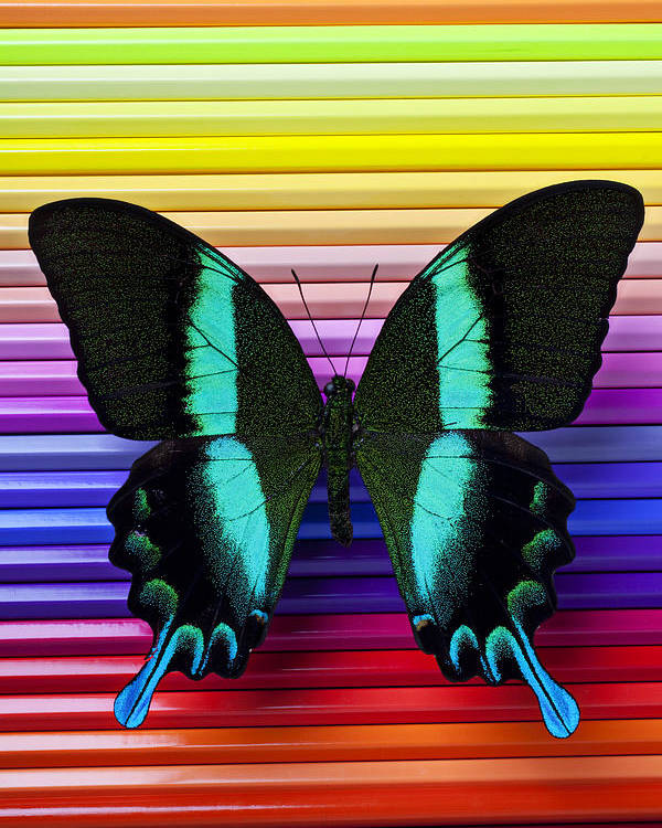 Butterfly Pencils Wings Insect Graphic Poster featuring the photograph Butterfly On Colored Pencils by Garry Gay