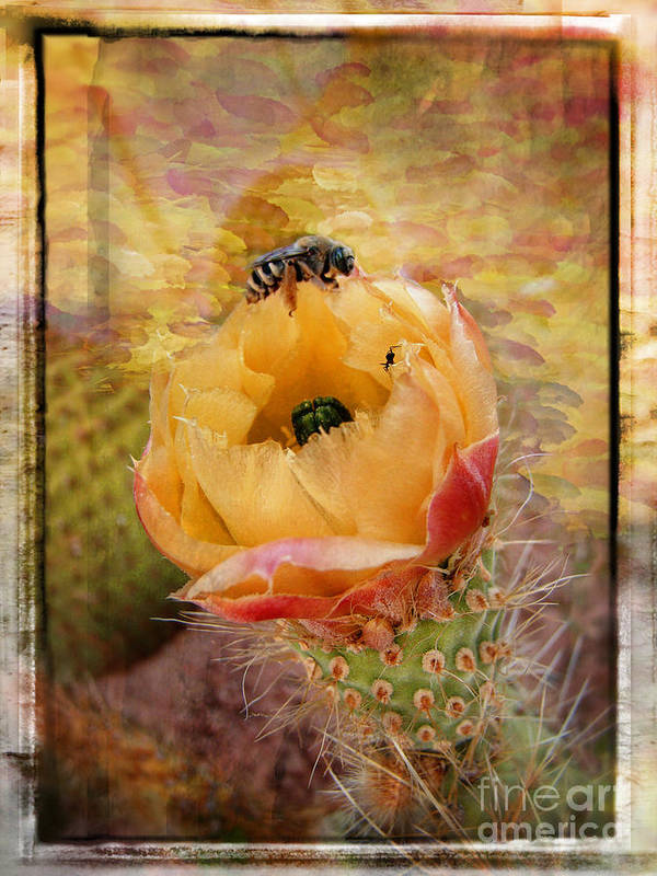 Cactus Poster featuring the photograph Cactus Spring Beauty W Frame by Beverly Guilliams