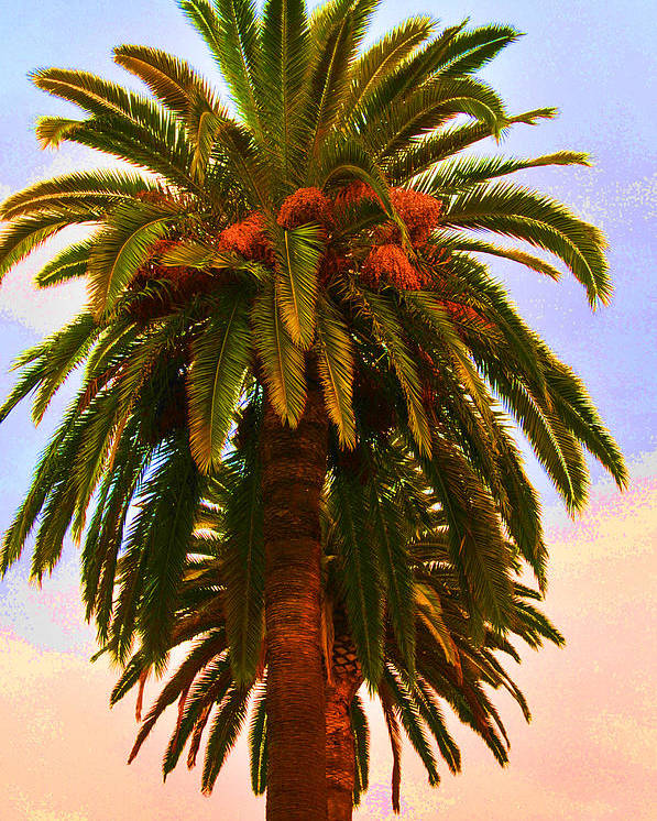 Palm Tree Poster featuring the photograph California by Heidi Horvath