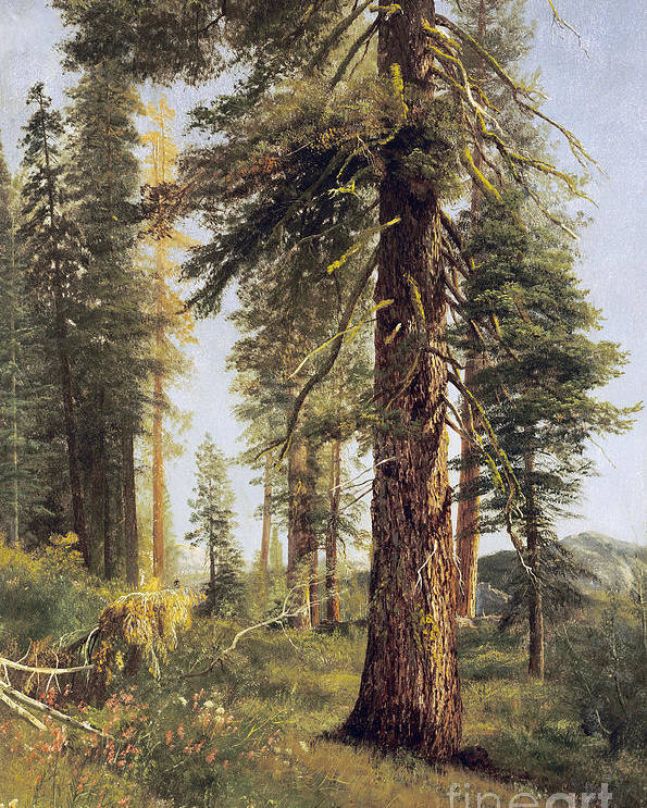 Albert Bierstadt Poster featuring the painting California Redwoods by Celestial Images