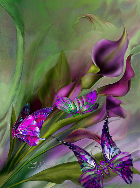 Calla Lilies Poster featuring the mixed media Calla Lilies by Carol Cavalaris