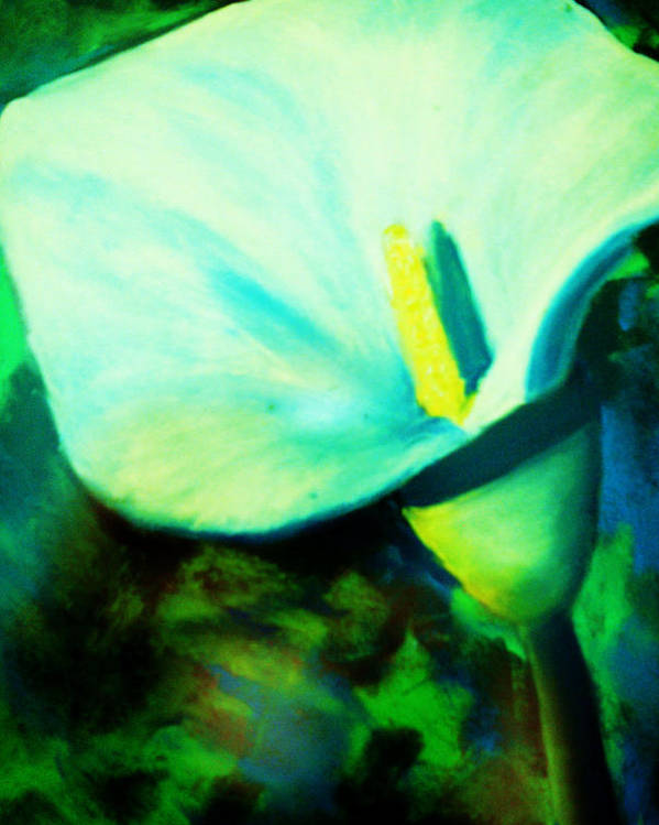 White Calla Lily Poster featuring the painting Calla Lily by Melinda Etzold