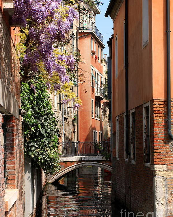 Venice Poster featuring the photograph Canal in Venice with Flowers by Michael Henderson