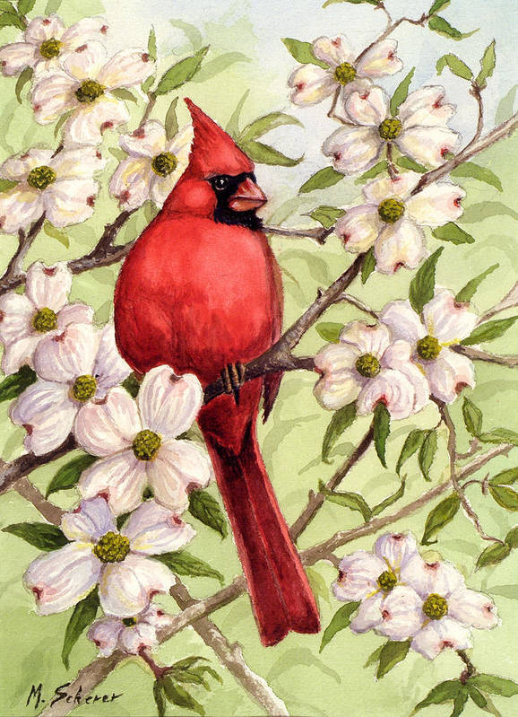 Wildlife Watercolor Poster featuring the painting Cardinal In Dogwood by Michael Scherer