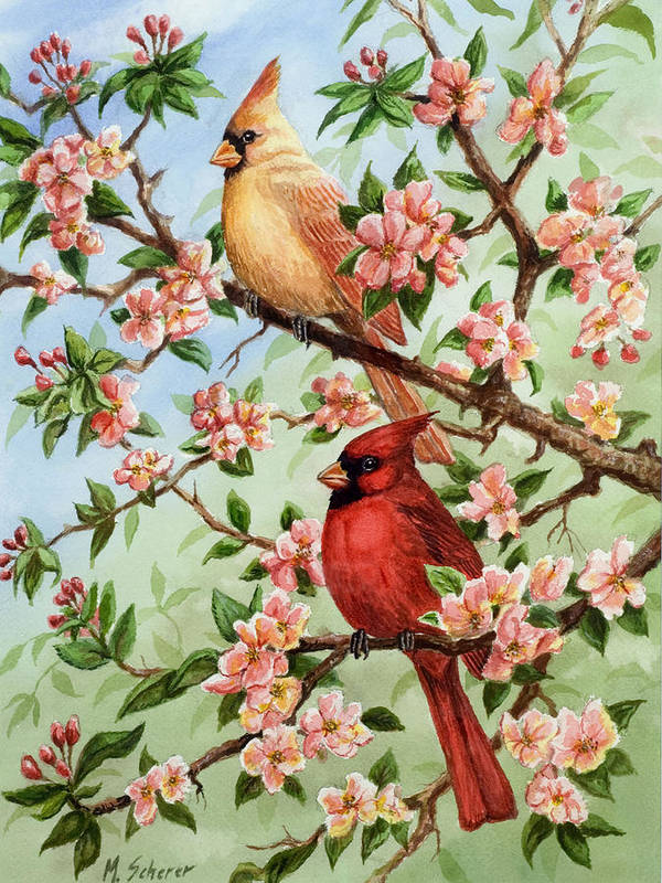 Painting Of Cardinals In Watercolor Poster featuring the painting Cardinals In Apple Blossoms by Michael Scherer