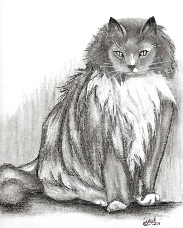 Cats Poster featuring the drawing Carl by Crystal Suppes