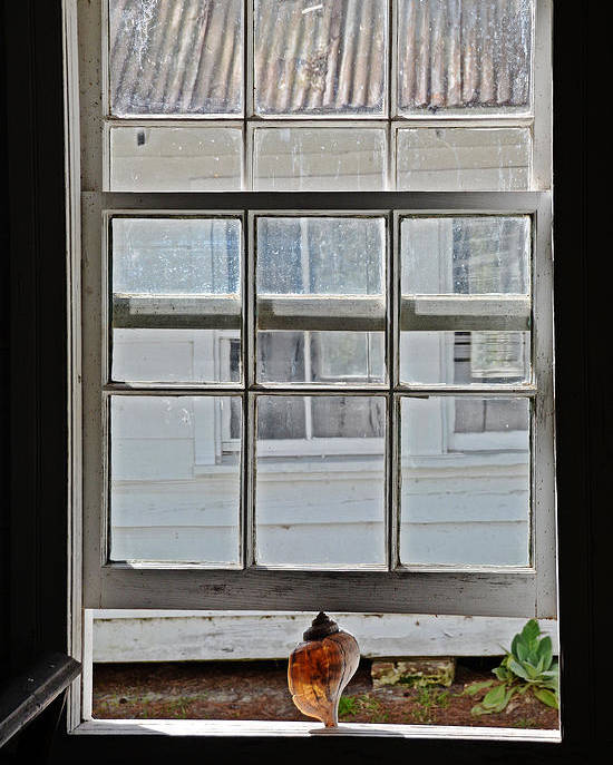 Window Poster featuring the photograph Catching The Sea Breeze by Linda Brown