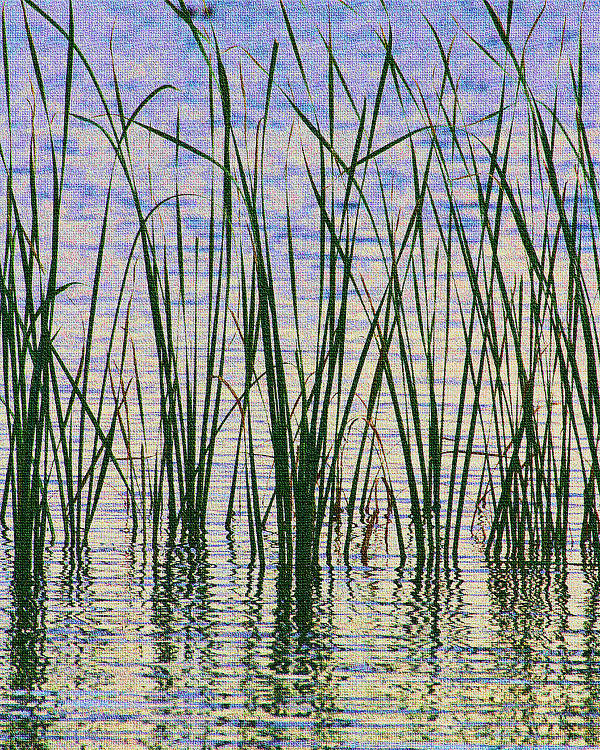 Cattails In The Lake Poster featuring the digital art Cattails In The Lake by Tom Janca