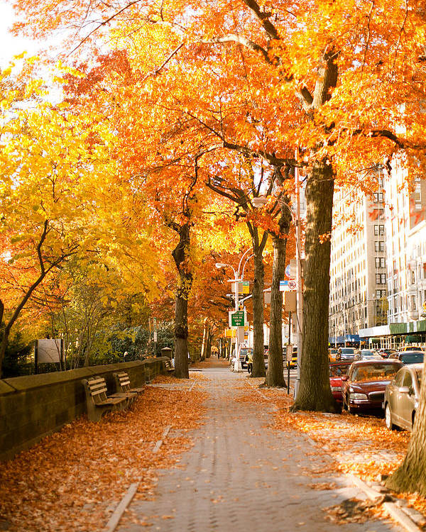 Yellow Leaves Poster featuring the photograph Central Park West by Ariane Moshayedi