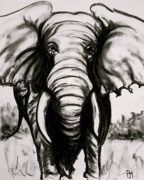 Elephant Poster featuring the drawing Charcoal by Pete Maier