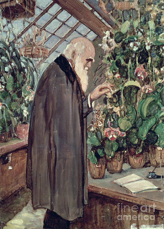 Charles Poster featuring the painting Charles Robert Darwin by John Collier