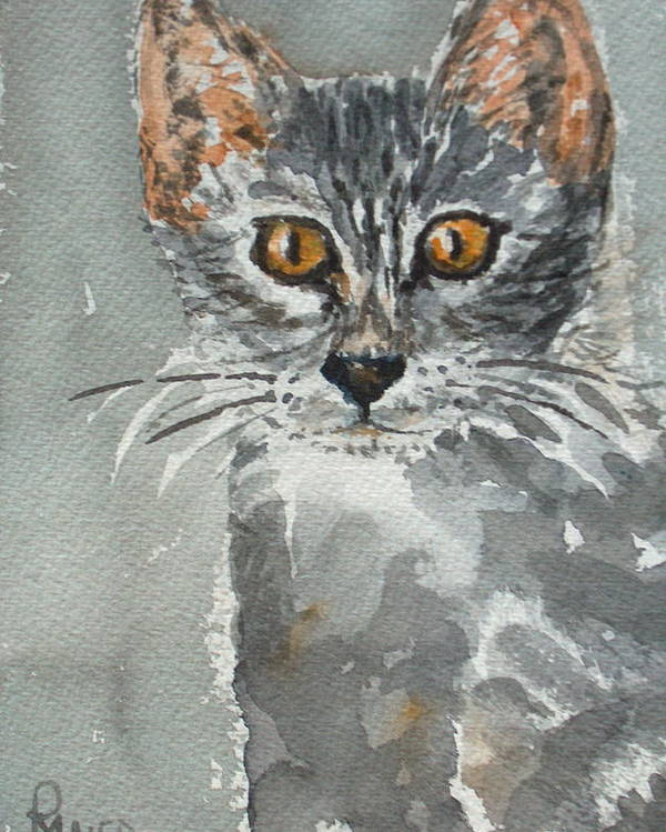 Kitten Poster featuring the painting Charlotte by Pete Maier