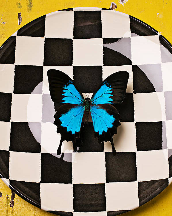 Blue Poster featuring the photograph Checker Plate And Blue Butterfly by Garry Gay