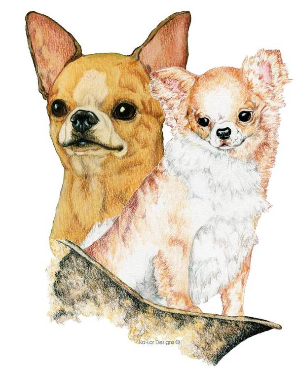 Chihuahua Poster featuring the drawing Chihuahuas by Kathleen Sepulveda