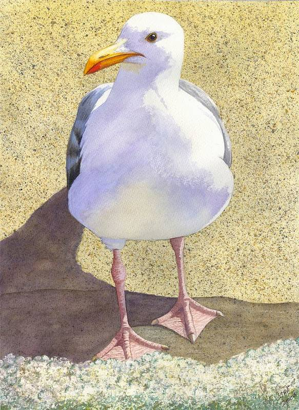 Seagull Poster featuring the painting Chilly by Catherine G McElroy