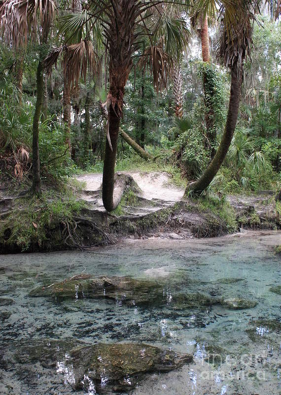 Lithia Springs Poster featuring the photograph Clear Water And Palms by Carol Groenen