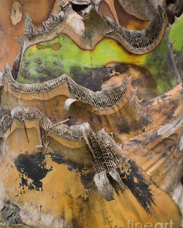 Asia Poster featuring the photograph Close Up Texture Of Cut Bananna Tree Trunk by Jason Rosette