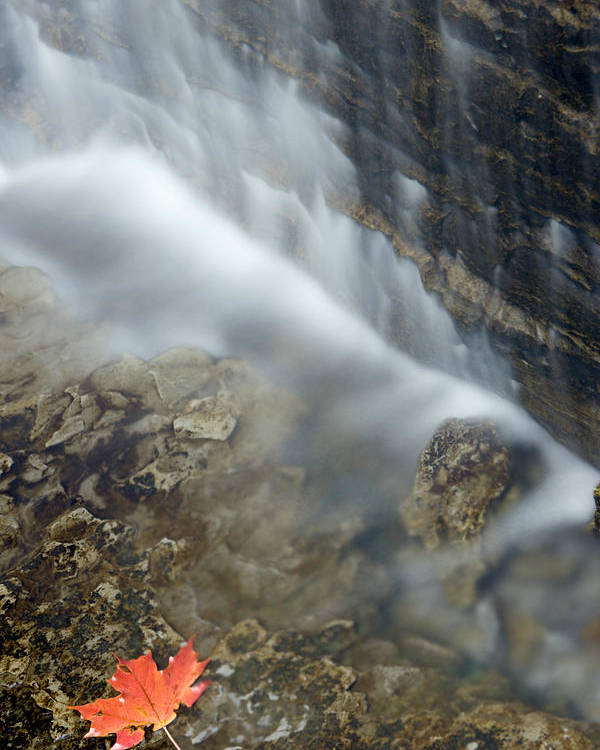 Light Poster featuring the photograph Closeup Maple Leaf And Decew Falls, St by Darwin Wiggett