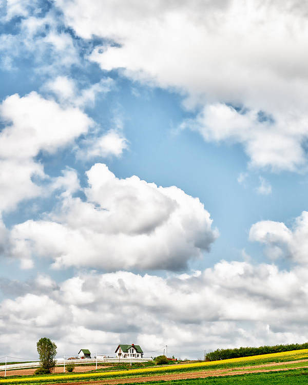 Clouds Poster featuring the photograph Clouds And Flowers by Johnny Sandaire