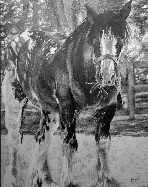 Horse Poster featuring the drawing Clydesdale by Darcie Duranceau