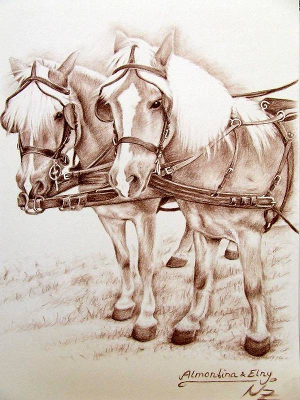 Horses Poster featuring the drawing Coach Horses by Nicole Zeug