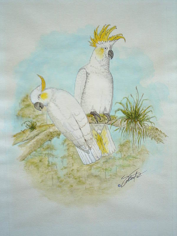 Birds Poster featuring the painting Cockatoos by Dennis Vebert