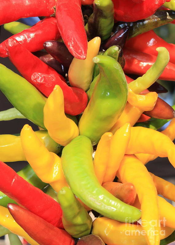 Peppers Poster featuring the photograph Colorful Chili Peppers by Carol Groenen