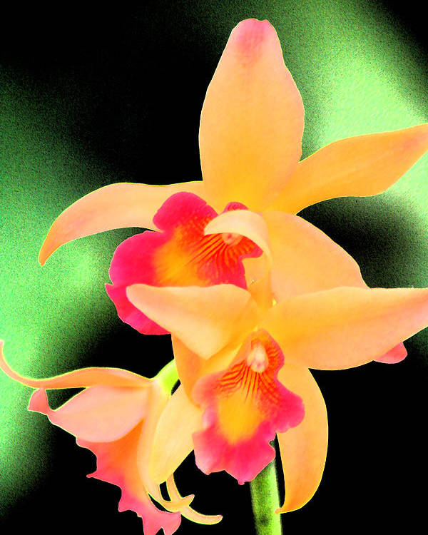 Orchid Poster featuring the photograph Colorful Orchid by Nanette Hert