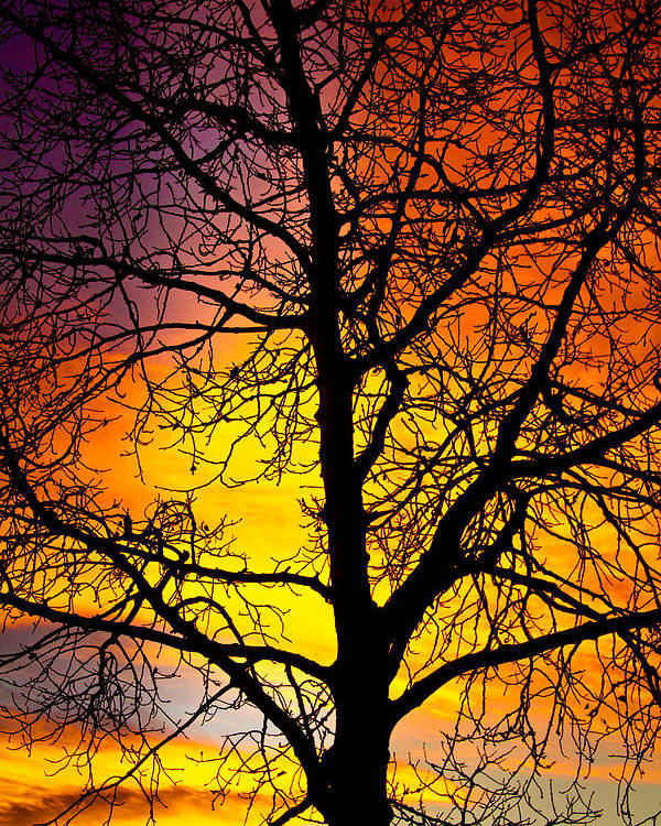 Silhouette Poster featuring the photograph Colorful Silhouette by James BO Insogna