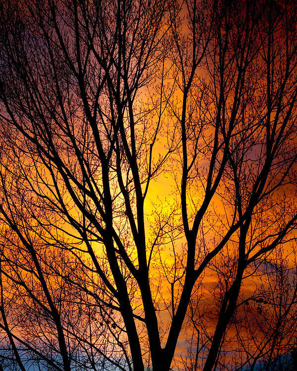 Vertical Poster featuring the photograph Colorful Tree Silhouettes by James BO Insogna