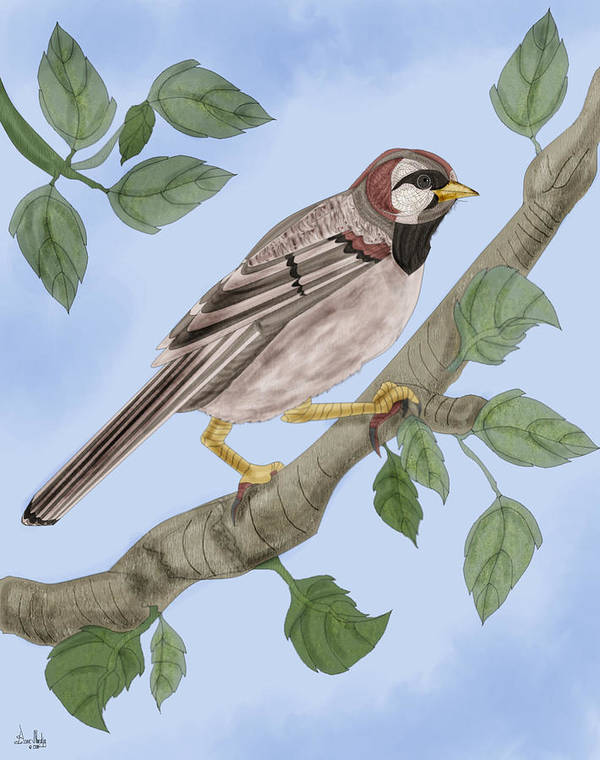 Sparrow Poster featuring the painting Common House Sparrow by Anne Norskog