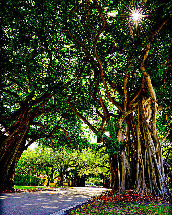 Coral Gables Poster featuring the photograph Coral Gables by Michelle Armstrong