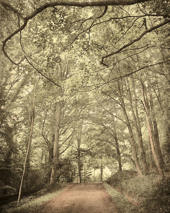 Afraid Poster featuring the photograph Cosy Path by Svetlana Sewell