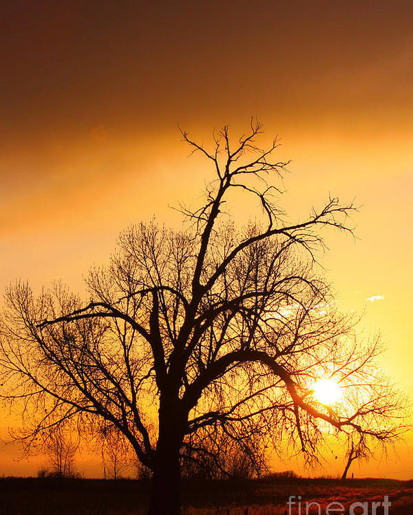 Sunrise Poster featuring the photograph Cottonwood Sunrise - Vertical Print by James BO Insogna