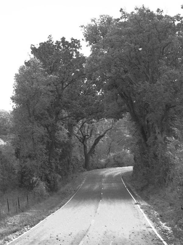 Trees Poster featuring the photograph Country Road by Audrey Venute