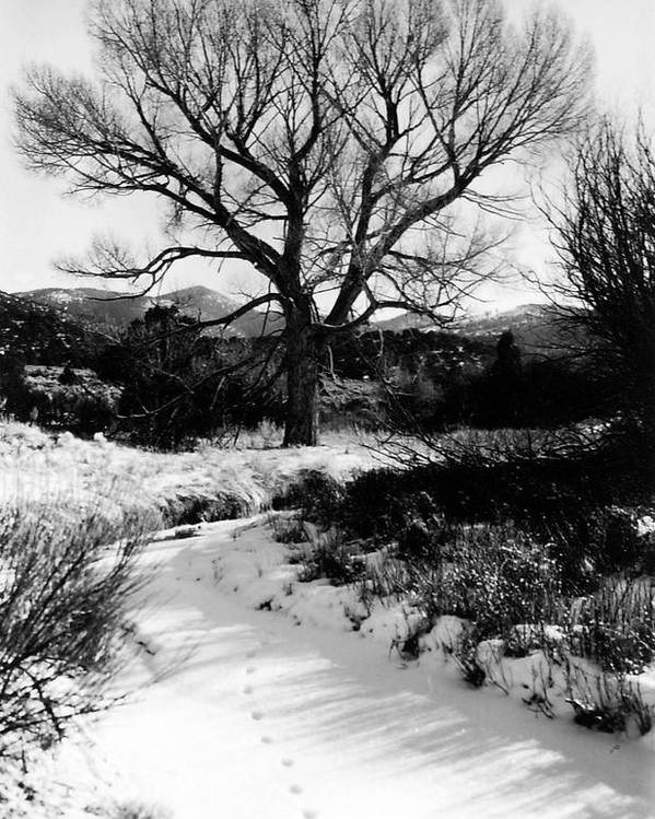 Landscape Poster featuring the photograph Creekside Winter by Allan McConnell