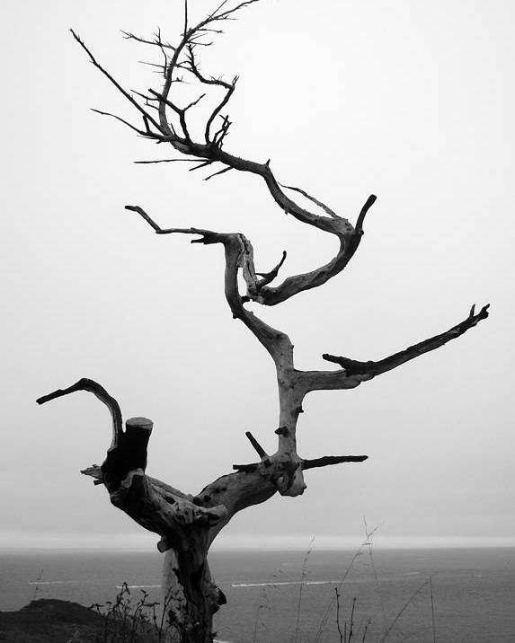 Tree Poster featuring the photograph Crooked Tree by Matt Hanson