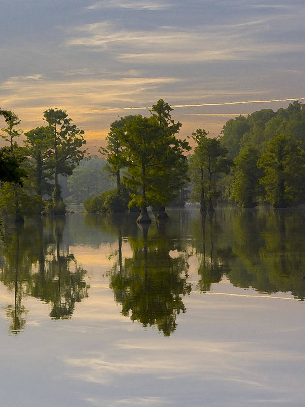 Greenfield Park And Gardens Poster featuring the photograph Cypress In Lake Reflection by Paul Boroznoff